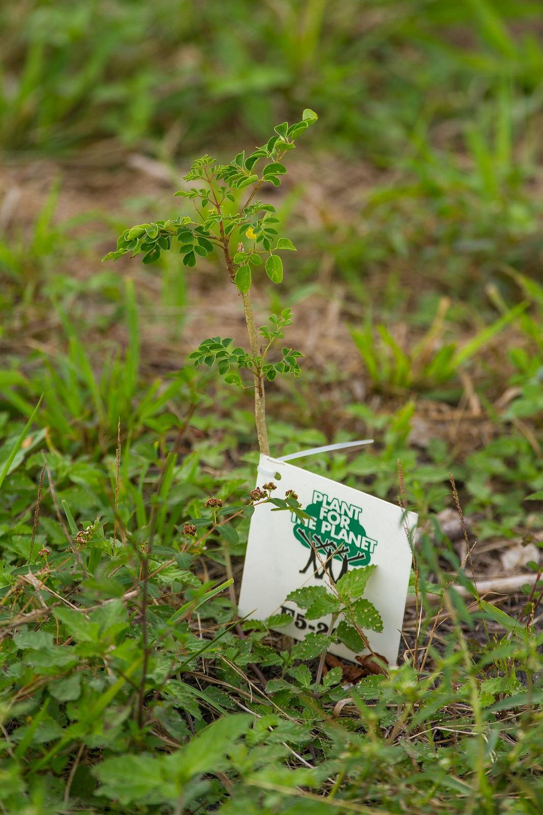 Plant-for-the-Planet -Bundesverdienstkreuz für Plant-for-the-planet & Soulcover wird klimaneutral bis 2020