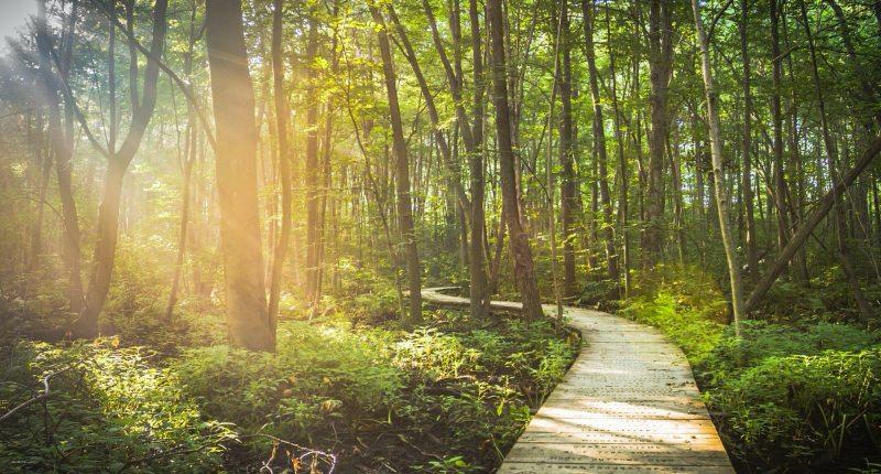 Wie kann ich ökologisch reisen?