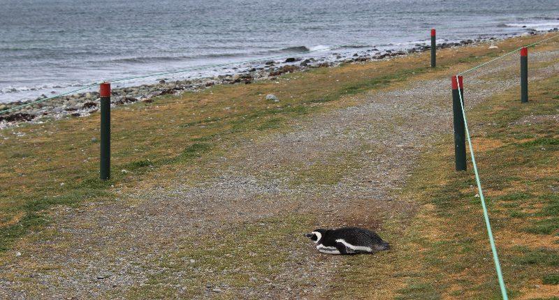 Allein unter Pinguinen – die Isla Magdalena