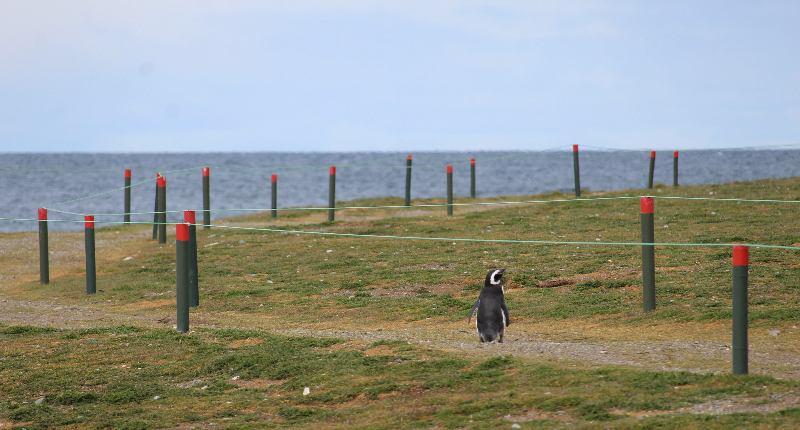 Von-Punta-Arenas-zu-den-Pinguinen-1